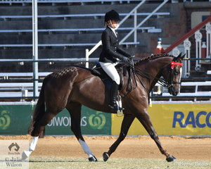 Experienced and successful young rider, Kaycee Wallen rode her, 'Timless Classy Affair' by the very well performed Australian Stock Horse, Ervine's Rollex to win the class for Novice Hack 15-15.2hh.