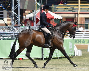 Phil Bobic is pictured aboard his own, the Universal Stables, Adam Oliver and Jayne Anderson's nomination, 'Regal Replica' by the outstanding Regal Banquet on their way to second place in the class for  Open Hack 16-16.2hh.