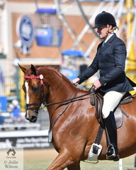 Craig Porter is pictured aboard his own and Shari Baldwin's, 'Jarendan Just That' during the judging of the Open Hack 16-16.2hh.