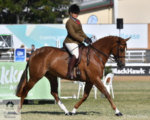 Abbey Lovell certainly knows her Show Hunters and she is pictured aboard the Lovell Family's typey, 'Stonleigh Holly Go Lightly' on their way to third place in the class for Novice Show Hunter Galloway 14.2-15hh.
