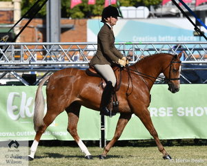Shari Baldwin rode her own and Craig Porter's nomination, 'Langtree Starshine' to win the class for Novice Show Hunter Galloway 14-14.2hh and go on to be declared Champion Novice Show Hunter Galloway.