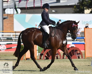 Eliza Douglas rode the Douglas Family's very well performed, 'Argyl Contender' to win the class for Lady's Hack.