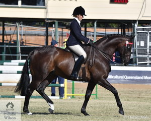 Jordan McDowall rode her , 'Under The Lights' to win the class for Open Hack 16-16.2hh.