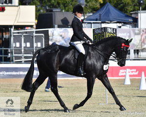 Tamicca Clottu has had a wonderful show with her beautiful, 'Afrika SP'. The mare by Snappy Halo was declared Champion Thoroughbred Under Saddle yesterday and today won both the Novice and Open 15.2-16hh Hack classes and was declared Reserve Champion Novice and Reserve Champion Open Hack.