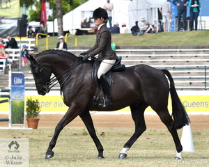 Ashley Cavanagh rode her, 'Lunar Star' by Laurie's As to take third place in the class for Novice Show Hunter 16-16.2hh.