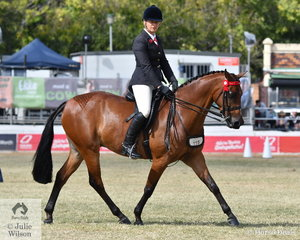 Kylie Matters', 'GF Top Of The Pops' took sixth place in the class for Open Heavyweight Galloway 14-14.2hh.