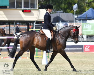 Shari Baldwin rode her own and Craig Porter's, 'Sangaria Baretta' to take fifth place in the class for Open Heavyweight Galloway 14-14.2hh.