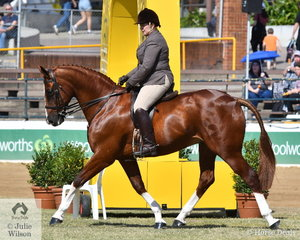 Better known for Thoroughbreds, Ross Lipp can pick a good horse whatever it is. She is pictured aboard her Warmblood, 'Remi Lord Locksley' by Locksley II that won the class for Novice Show Hunter 16-16.2hh and went on to be declared Champion Novice Show Hunter.