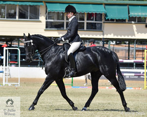 Lisa Berry's well performed, 'Calvin Park Dark Knight' won the class for Open Heavyweight Galloway 14.2-15hh.