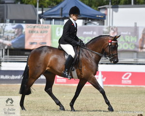 Well known and successful showing enthusiast, Carmel Perkins had a great day with her 'Alpine Park Dreamtime' that won the Novice 14-14.2hh and the Open Heavyweight 14-14.2hh Galloway classes. Alpine Park Dreamtime was declared Reserve Champion Novice Galloway.