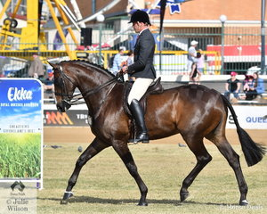 Joe Baxter rode the Austin, Lilley and Baxter nomination, the Champion Led Warmblood Mare, 'EBL Empress' to win the class for Novice Show Hunter Over 16.2hh and claim the Novice Show Hunter Reserve Championship.