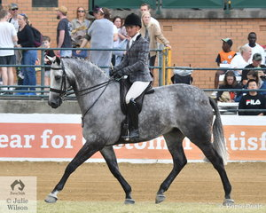 Phil Bobic won the Gent's Show Hunter class and was second in the Open Over 16.2hh class riding the impressive Universal Stables and Rebecca Crane Nomination, 'AATC Kracker-Jack' by AATC Tushinski.