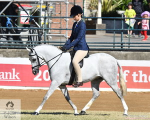 Linda Daetz rode her, 'Readimarr Blue Lace' to win the class for Novice Show Hunter Pony 12.2-13hh.