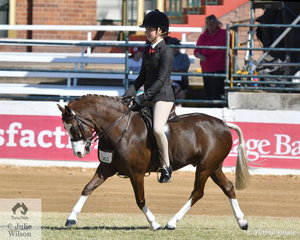 Louisa Dossitor's, 'Wyann Safari' took fourth place in the class for Open Show Hunter Pony N.E. 12hh.