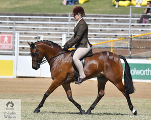 The Harper-Purcell and Oldham nomination, 'Piece Of The Puzzle' won the Novice Show Hunter Pony 13-14hh and was declared Reserve Champion Novice Show Hunter Pony. They went on to take third place in the class for Open Show Hunter Pony 13.2-14hh.