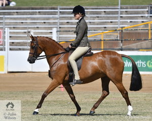 The 18/24 Equine nomination, 'Kamilaroi Mystique' took fourth place in the class for Novice Show Hunter Pony 13-14hh.