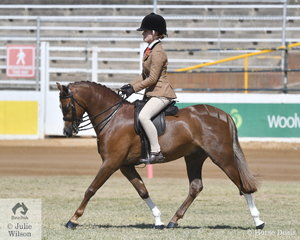 Caitlin Senter rode the Senter family's, 'Bordershow Waltzing' to win both the Novice and Open classes for Show Hunter Pony n.e 12hh. They claimed the Novice Show Hunter Pony Championship and were Reserve Champion Open.