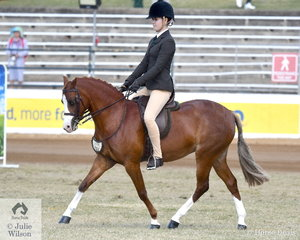 G and J Arthy's nomination, 'Loralla Songbird' took second place in the class for Open Show Hunter Pony 12.2-13hh.