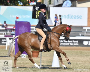Bianca Vankampen rode the Austin, Lilley and Edward's nomination, 'angtree Wild Orchid' to win the class for Riding Pony under Saddle n.e. 12.2hh and go on to take out the Reserve Champion Riding Pony under Saddle.