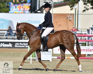 The McCool/Lawson nomination of 'Euston Toy Tales' took third place in the class for Riding Pony under Saddle 13.2 hh and ne 14.2hh.