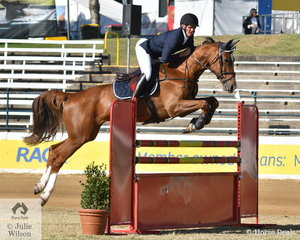 Successful Queensland rider, Tim Bowman has progressed up through the Junior and Young Rider ranks at the Ekka and is pictured aboard his home bred, 'Calaza Park Casselli Law' during the Group C jump off class this morning.