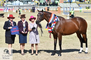 Janine Shepherdson and Lucy Thompson's Champion Led Gelding, 'Sigmund' (Casino Prince/Uncanny Lady) went on to be declared Supreme Led ANSA Exhibit. Pictured L-R Glennis Miller standing in for ANSA representive and garland sponsor, Cheryl Dunstan, judge, Linda Makejev and Janine Shepherdson.