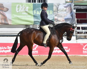 Elyse Douglas rode the Douglas Family's, 'TL Toy Boy' to win the class for Open Pony 13.2-14hh and go on to claim the 2019 Royal Queensland Show Large Pony Championship.