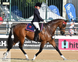 Stephanie O'Connor rode her well performed, 'Supreme' to take second place in the class for ANSA Mare/Gelding Over 16hh Under Saddle.