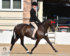 Rhys Stanley rode the Universal Stables and Adam Oliver nomination and Reserve Champion Novice Large Pony, 'Langtree Gift' to take second place in the class for Open Pony 13.2-14hh.