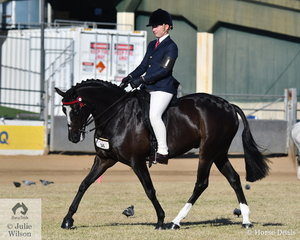 The Jackson boys had a successful time on the Ekka arena today. Chase Jackson had already won the Junior Boy Rider Championship and this afternoon, older brother, Jack won the class for Boy Rider 12 AU 15 Years and went on to be declared Reserve Champion Senior Boy Rider.