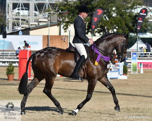 Joe Baxter rode the impressive ,Austin, Lilley and Baxter nomination, 'EBL Empress' (W Ellington imp USA/EBL Lush) to win the Mare Under Saddle class and go on to be declared 2019 Royal Queensland Show Champion Arabian Derivative Under Saddle.