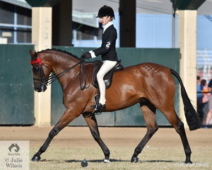 Riley Marin is certain to return to the Ekka, and its not just the weather. The Victorian rider has had a super show and today he won the class for Boy Rider 15 AU 17 Years and went on to be declared Champion Senior Boy Rider.
