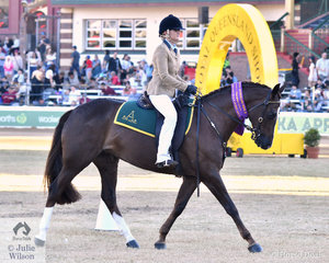 Kaycee Wallen rode her, 'Timeless Classy Affair' (Ervine's Rolex/Silky Milk) to win the class for Australian Stock Horse Under Saddle and go on to claim the Champion Australian Stock Horse Hack award.