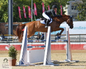 Maleah Lang-McMahon is pictured in a beautiful position aboard, 'KS Sovereign's Cadel' during the Junior Showjumping Championship this morning. Maleah took second place with Cadel and won the class riding KS Capulet Ego Z and after a very successful show went on to be declared 2019 Royal Queensland Show Champion Junior Rider.