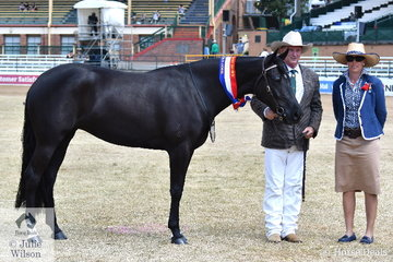 Madison Bryans', 'Hillviewlodge Opulent' (Donrica Winchester/Milly Millions) won the class for Three Year Old Mare, was declared Champion Mare and went on to be declared Supreme Champion Led Australian Stock Horse Exhibit. The mare is pictured with judge, Carly Domrow and John Bryans.