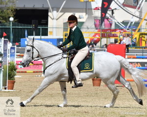 Mel Walsh is pictured aboard the Allstars Australian Performance Horses' wonderful, 'Ervines Rollex'. They took second place in the ASHLA class and Rollex won the class for Working Australian Stock Horse Stallion.