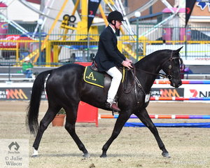 Terry Ryan rode his, 'Cee Dee Deja Vu' (Acres Destiny/Cee Dee Monsoon) to take second place in the class for Working Australian Stock Horse Gelding.