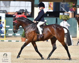 Not to be left out, Piper Thompson rode the Douglas Family's, 'TL Toy Boy' to take third place in the class for Child's Pony 13-14hh.