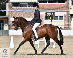 Tori Bowden's, 'Arinlea Classic Composer' is pictured during the class for Child's Pony 13-14hh.