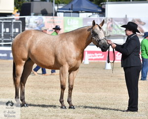 Ruth Gough took out the class for Appaloosa Mare/Filly Any Age with her, 'Chocolicious' (Henry's Alchemist/Flawless).