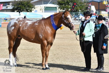 Katrina Lewis won the class for Appaloosa Stallion/Colt Any Age with her, 'Ya Call That Subtle' (Subtle imp/Riverdowns Class Lass) and went on to claim the Best Appaloosa award. Katrina is pictured with judge, Lorelei Payne.