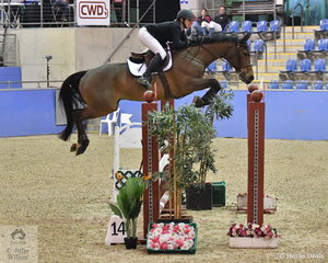 Brooke Campbell and the talented Copabella Voltage won the Waratah Showjumping CSI 1* 1,40m and the $1000 first prize with a double clear round.