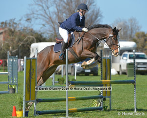 """""""Emirates Fox Trot"""" in the EvA95 Section 2 Showjumping phase ridden by Jana Rzepecki"""