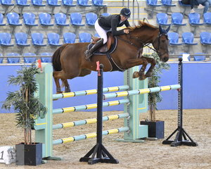 Jennifer Wood rode Cassando B to fourth place in the Antares Australia 1.30-1.35m Open Art.238 2.1.