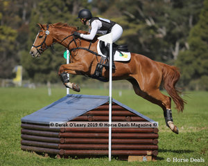 """Jessica Grossman placed 6th in the CCN3*-S riding """"Sandhills Stanza"""" with a final score of 57.4"""