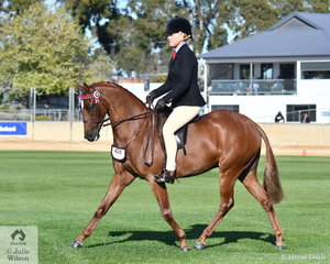 Leanne Donaghue got the first call in the class for Novice Pony 13.2-14hh with Stephanie Rozaklis' eye catching, 'Donlea Pervincial'. He was a bit green on the vast Adelaide arena to go all the way and took sixth place in the class.