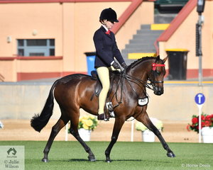 Charlie Hunt rode the Argyl Stud's, 'Argyl Melody' to take second place in the class for Novice Pony 13.2-14hh.
