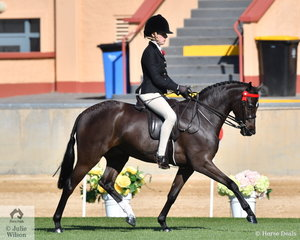 Bel Kerr rode C Lawrie and H Stanton's, 'Kolbeach Holly's Sterling' to take second place in the class for Novice Pony 13-13.2hh.