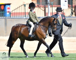 With Sienna Jessup in the saddle and Carsten Graetz on the end of the lead line, Ava Nusbajtel's, 'Final Call of Priory' took third place in the class for Show Hunter Leading Rein Pony. Earlier this pony won the class for Novice Hunter Pony N/E 12 hh.