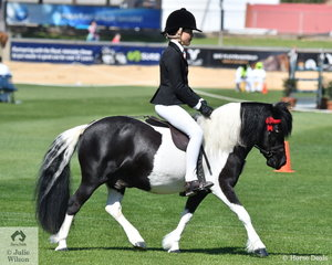 Ada Natale rode Kellie Webster's, 'Kimba Karrue' to take second place in the class for Shetland 10-10.2hh and go on to claim the Ridden Shetland Reserve Championship.